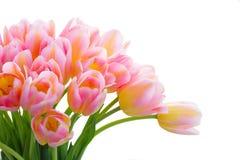 Ramalhete de tulipas amarelas, roxas e vermelhas Fotos de Stock Royalty Free