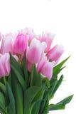 Ramalhete de tulipas amarelas, roxas e vermelhas Foto de Stock