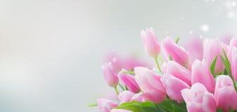 Ramalhete de tulipas amarelas, roxas e vermelhas Imagem de Stock Royalty Free