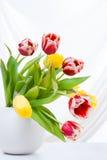 Ramalhete de tulipas coloridas no vaso Foto de Stock