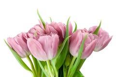 Ramalhete de tulipas cor-de-rosa Fotos de Stock Royalty Free