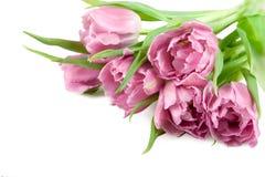 Ramalhete de tulipas cor-de-rosa Foto de Stock Royalty Free