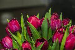 Ramalhete de tulipas cor-de-rosa em um interior Imagens de Stock Royalty Free