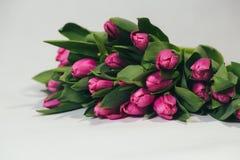 Ramalhete de tulipas cor-de-rosa no fundo branco Imagem de Stock Royalty Free