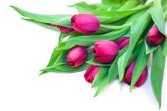 Ramalhete das tulipas isoladas no branco Foto de Stock