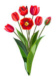 Ramalhete de tulipas vermelhas Fotografia de Stock