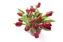 Ramalhete de tulipas vermelhas Fotos de Stock Royalty Free