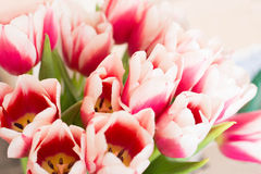 Ramalhete de tulips cor-de-rosa Imagem de Stock