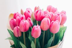 Ramalhete de tulips cor-de-rosa em um fundo branco imagens de stock royalty free