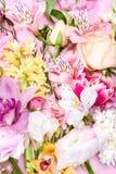 Ramalhete de vários flores e botões de florescência bonitos Fotografia de Stock Royalty Free
