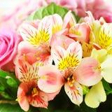 Ramalhete delicado da fr?sia e das rosas postcard imagens de stock