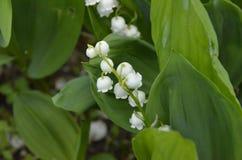 Ramalhete do branco com a tulipa média e cor-de-rosa azul foto de stock