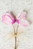 Ramalhete do cíclame cor-de-rosa em um fundo branco do papel da textura Cartão com as flores para o aniversário, aniversário, cas foto de stock