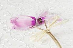 Ramalhete do cíclame cor-de-rosa em um fundo branco do papel da textura Cartão com as flores para o aniversário, o aniversário, o imagem de stock royalty free