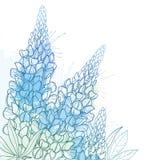 Ramalhete do canto do vetor grupo da flor do tremoceiro ou do Lupine ou do Texas Bluebonnet do esboço, botão e folha ornamentado  ilustração do vetor