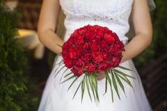 Ramalhete do casamento de rosas vermelhas e de folhas nas mãos das noivas Fotografia de Stock Royalty Free