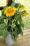 Ramalhete do girassol do partido de jardim Imagem de Stock