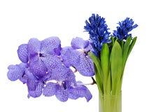 Ramalhete do hyacinth e do orchidea Imagem de Stock Royalty Free