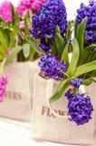 Ramalhete do jacinto azul no saco da lona Foto de Stock