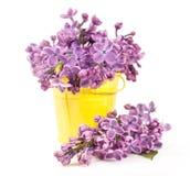 Ramalhete do lilás em uma cubeta amarela imagens de stock