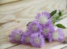 Ramalhete do Lilac de flores selvagens Foto de Stock