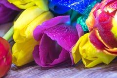Ramalhete do macro do close up das tulipas do cartão vermelho e roxo amarelo das tulipas Imagens de Stock
