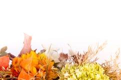 Ramalhete do outono Flores e groselha de cabo secadas no branco Foto de Stock Royalty Free