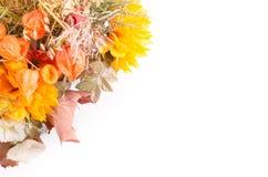 Ramalhete do outono Flores e groselha de cabo secadas no branco Imagem de Stock Royalty Free