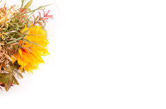 Ramalhete do outono Flores e groselha de cabo secadas no branco Fotografia de Stock Royalty Free