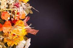 Ramalhete do outono Flores e groselha de cabo secadas no preto Foto de Stock