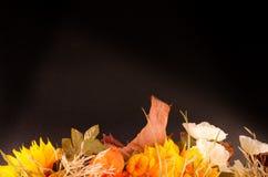 Ramalhete do outono Flores e groselha de cabo secadas no preto Fotos de Stock