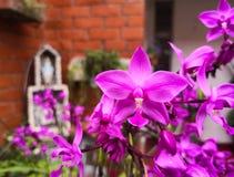 Ramalhete do plicata de Spathoglottis no jardim bonito com um altar tradicional fotos de stock