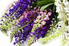 Ramalhete do tremoceiro das flores Fotos de Stock