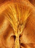 Ramalhete do trigo imagens de stock