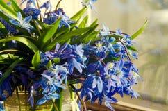 Ramalhete do vaso de vidro dos snowdrops azuis na soleira O conceito da aproximação da mola imagens de stock royalty free