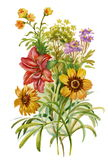 Ramalhete do verão das flores Imagem de Stock