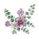 Ramalhete do vetor da aquarela com as folhas do eucalipto e as flores verdes do açafrão Imagem de Stock Royalty Free