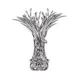 Ramalhete do vetor da grama da almofada ilustração royalty free