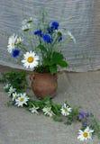 ramalhete dos camomiles e do jarro da argila do jardim das centáureas imagens de stock royalty free