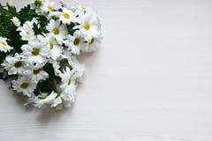 Ramalhete dos crisântemos brancos no fundo de madeira branco fotografia de stock