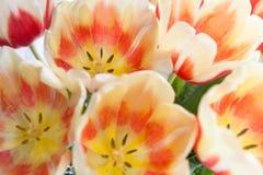 Ramalhete dos Tulips Imagens de Stock Royalty Free