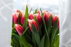 Ramalhete dos Tulips Foto de Stock