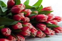 Ramalhete dos Tulips Imagem de Stock Royalty Free
