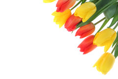 Ramalhete dos tulips em um fundo branco Foto de Stock Royalty Free