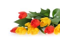 Ramalhete dos tulips em um fundo branco Foto de Stock