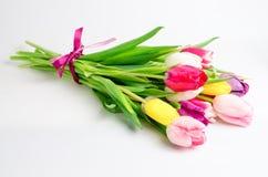 Ramalhete dos tulips isolados no fundo branco Fotografia de Stock Royalty Free
