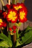 Ramalhete dos vermelhos e dos amarelos Fotos de Stock Royalty Free
