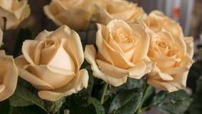 Ramalhete encantador de rosas bege bonitas Imagens de Stock