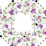 Ramalhete fúcsia roxo Flor botânica floral Grupo da ilustração do fundo da aquarela Quadrado do ornamento da beira do quadro ilustração stock