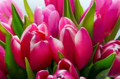 Ramalhete grande do vermelho das tulipas Fotografia de Stock Royalty Free